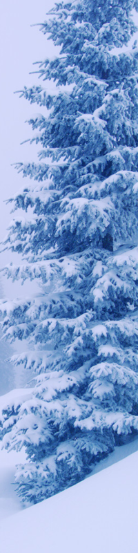 Winter Trees2